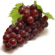 "Profile picture of Jennifer ""Grapes"" Woehl"